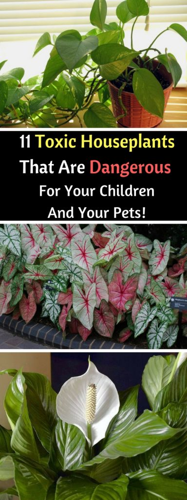 11 Toxic Houseplants That Are Dangerous For Your Children And Your Pets!