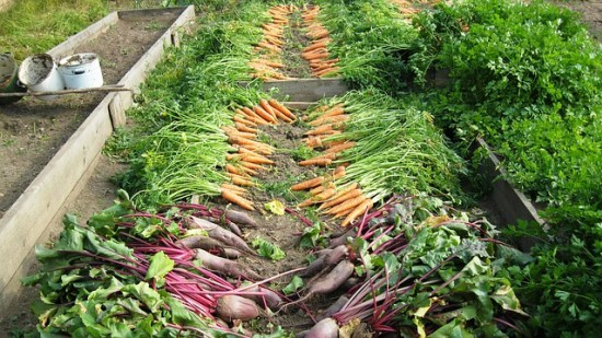 habits-of-highly-productive-gardeners