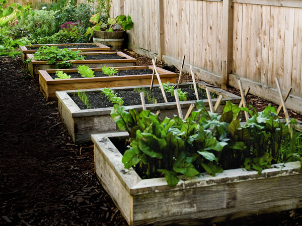 Raised Bed Gardening The Ultimate Guide