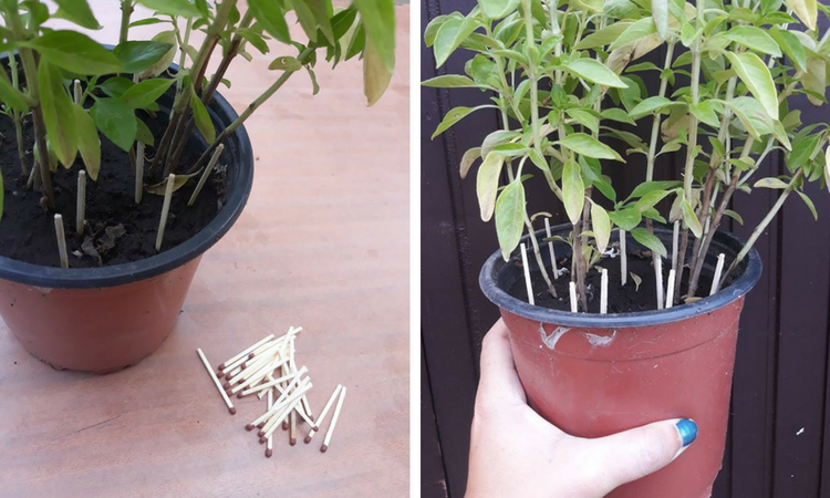 Why You Should Place Matches In Your Flower Pots