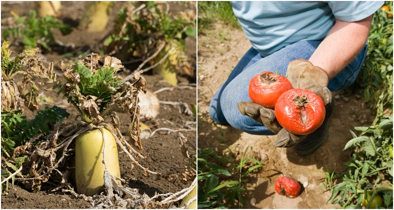 veg-garden-mistakes