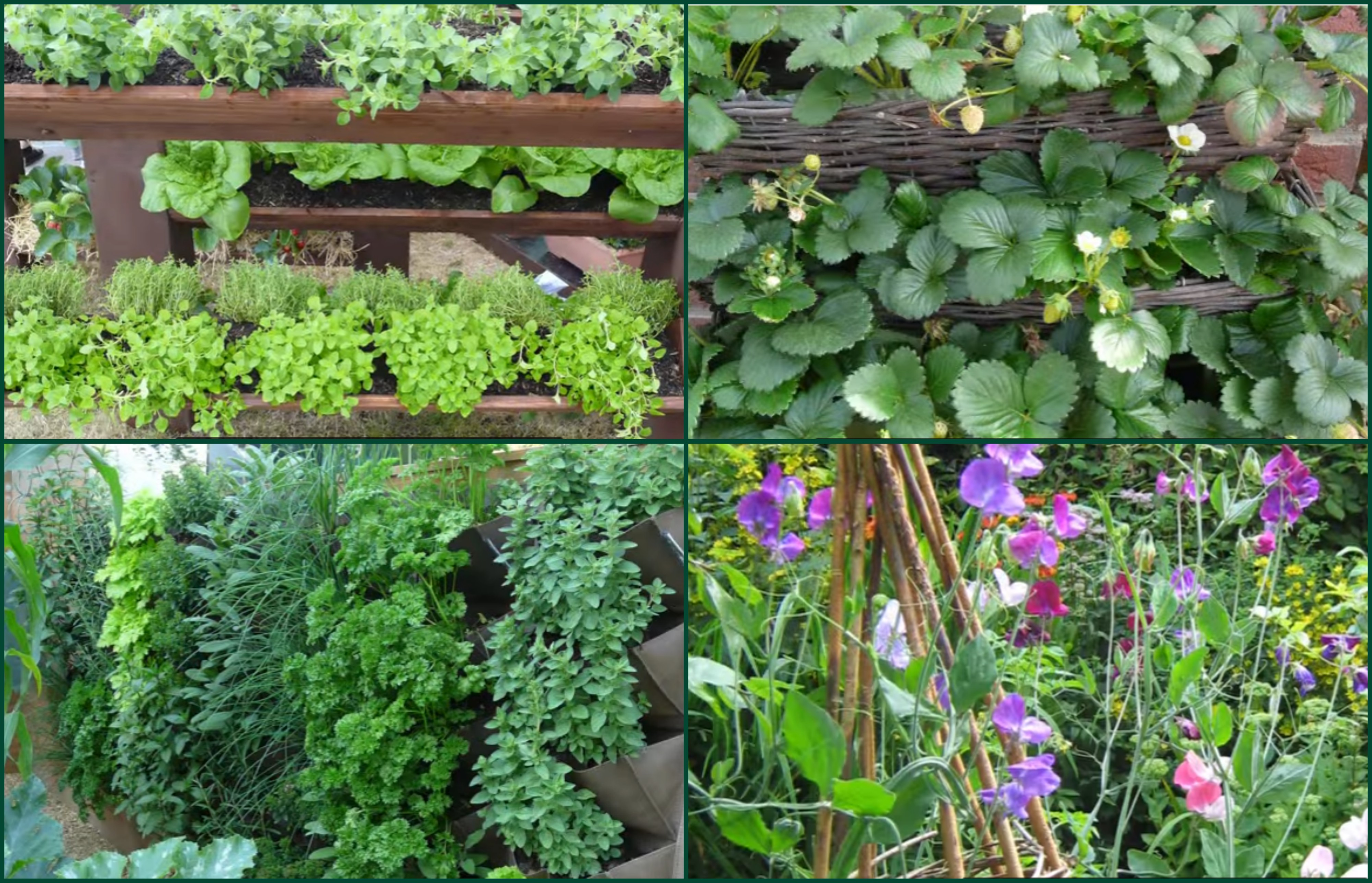 Beautiful Vegetable Gardening for Dummies