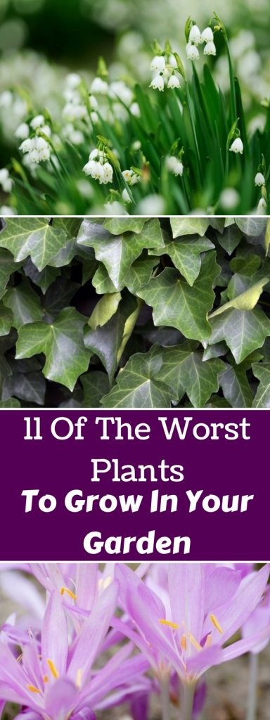 11 Of The Worst Plants To Grow In Your Garden