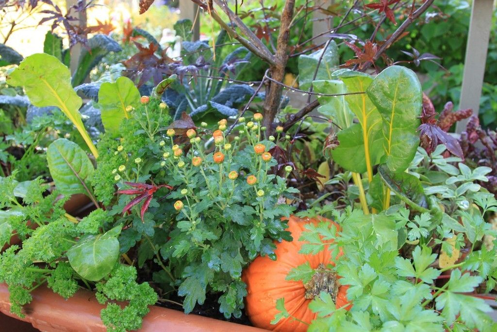 Plant these amazing flowers and see how your vegetable garden improves significantly Flowers to plant in vegetable garden