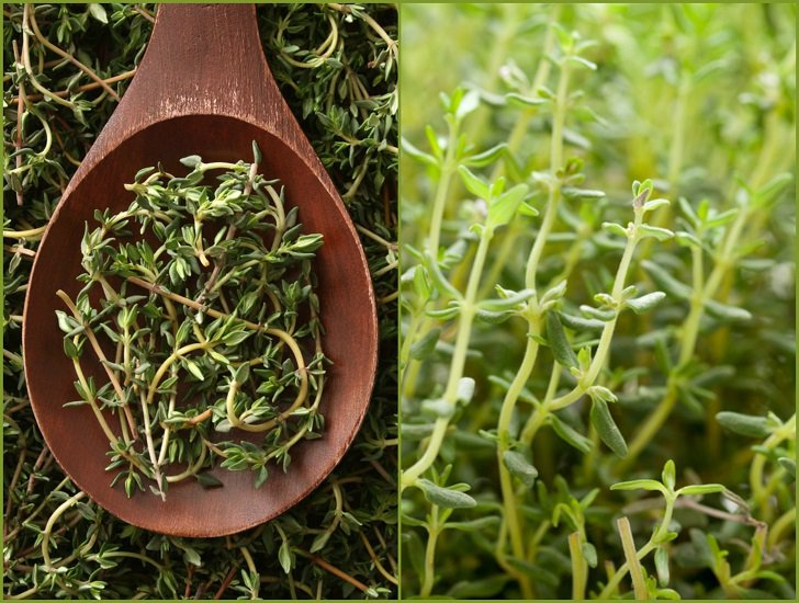 Heres-Why-You-Should-Grow-Thyme-18-Ways-To-Use-It