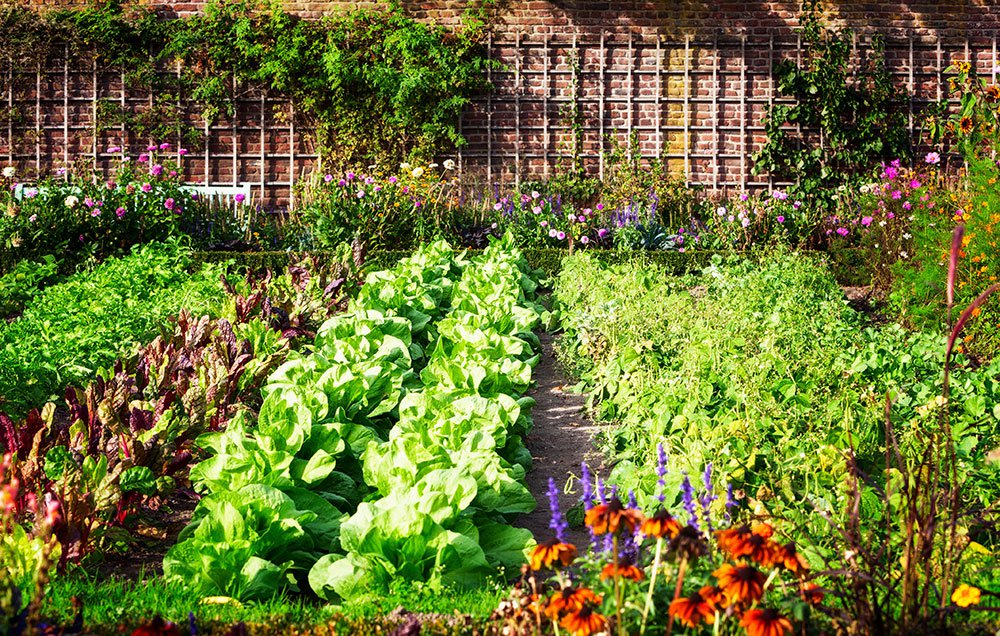 How To Plan A Pretty And Productive Vegetable Garden