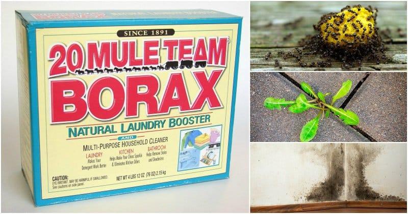 borax-uses-2 (1)