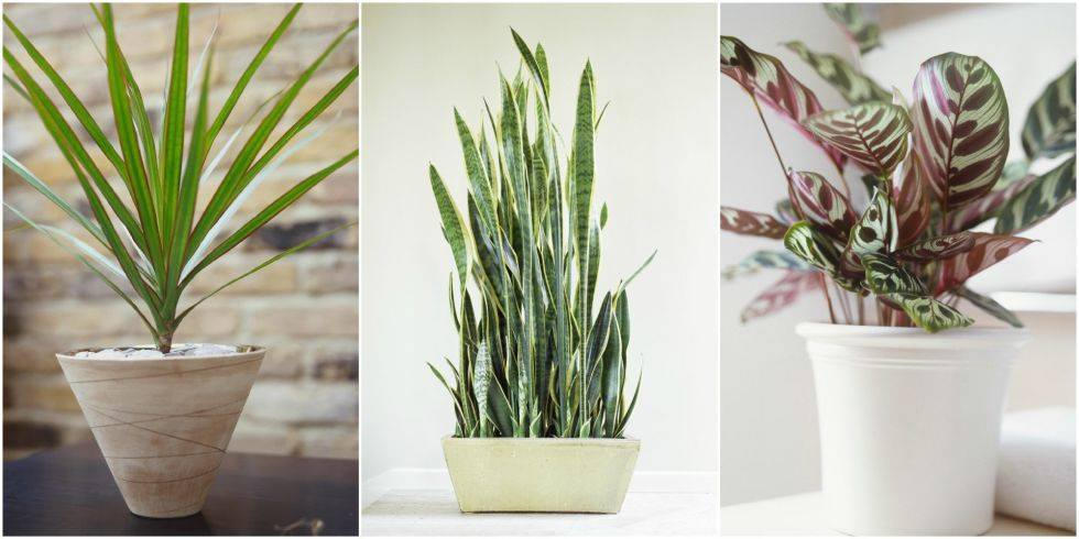 10-plants-darkest-corners