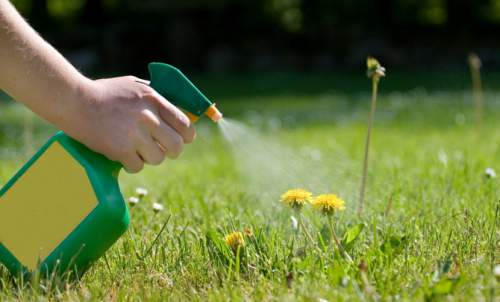5 Ways To Kill Unwanted Weeds In Your