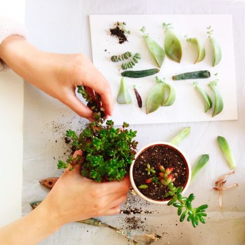 10 Things You Never Knew About Succulents