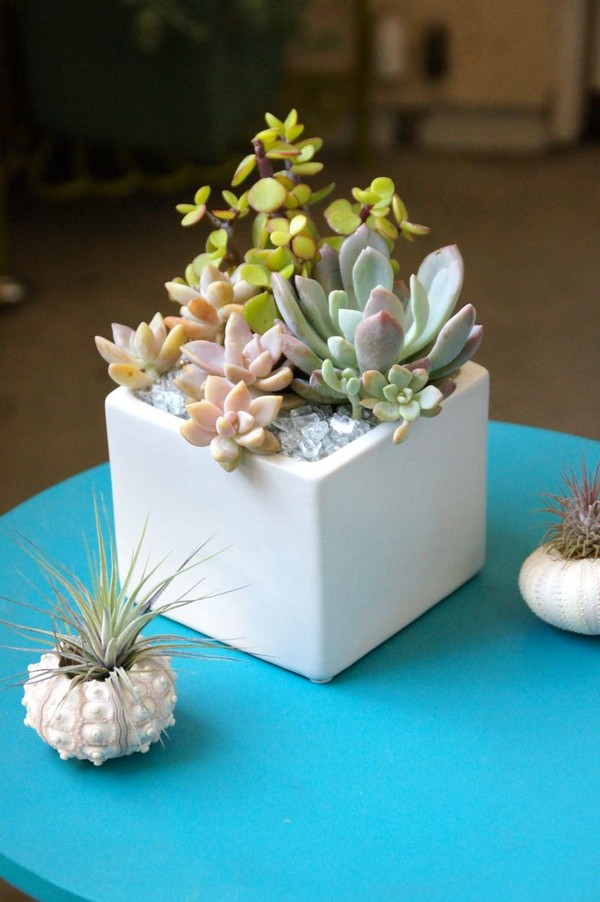 Cute Tiny Succulent Planters That You Will Instantly Fall