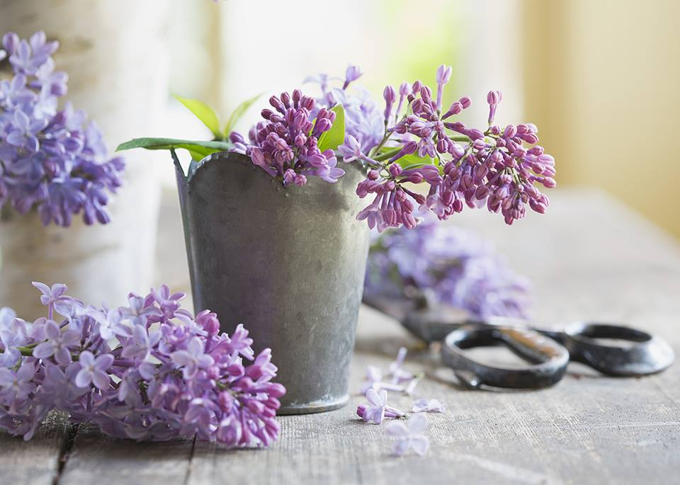 flowers-bloom-faster