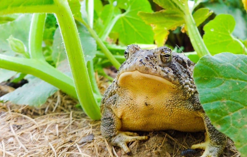 toads-main
