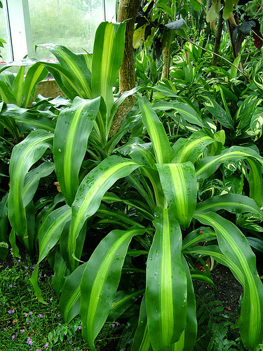 Top 10 Tropical House Plants Any One Can Grow