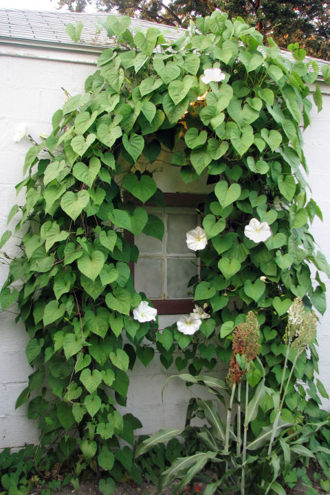 Hanging Plants Outdoor Shade