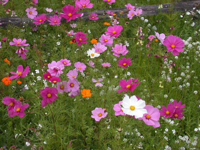 15 low maintenance plants that require little gardening work for Flowers that require low maintenance
