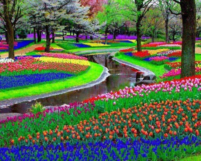 3. Dubai Miracle Garden