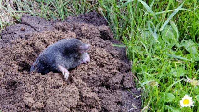 moles-effective-solutions