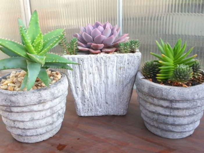 stop-buying-succulents