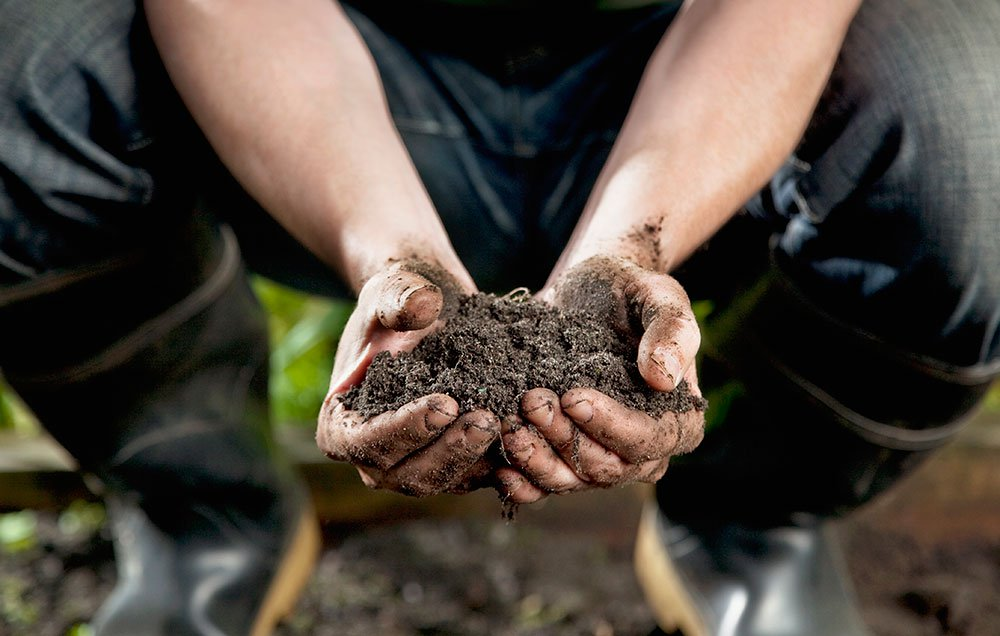 Everything you need to know about soil ph for a healthy garden for Everything about soil