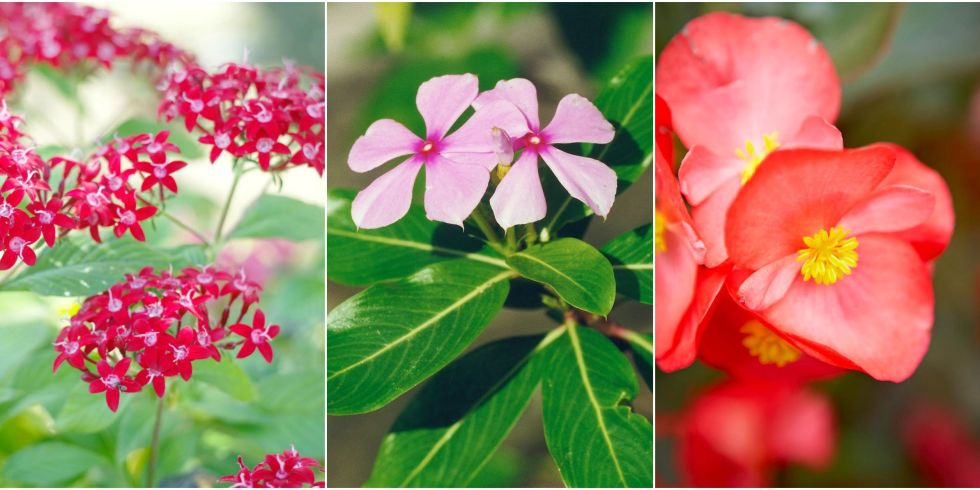 10 Heat Tolerant Plants That Will Survive And Thrive
