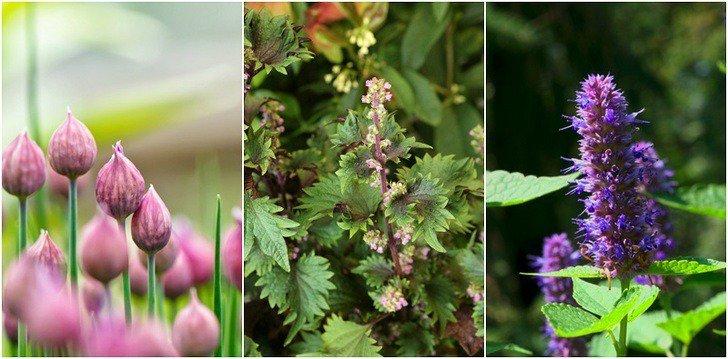 10-rare-herbs-garden