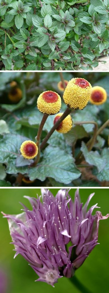 10 Really Rare Herbs You Should Try Growing In Your Herb Garden