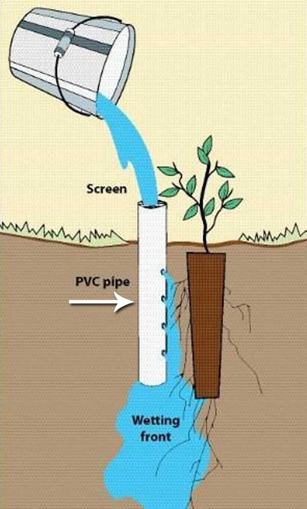Deep Pot Irrigation Uses An Open Ended PVC Pipe Placed Next To A Planted  Seedling.