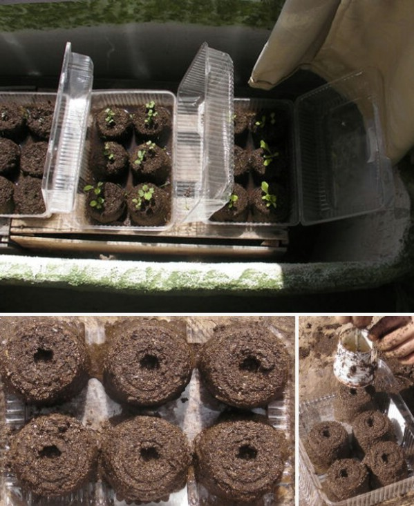 Toilet Paper Roll Seed Starter Pots