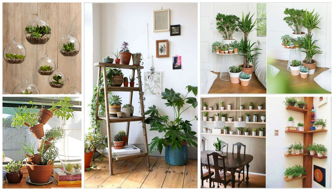 12-ideas-indoor-plants