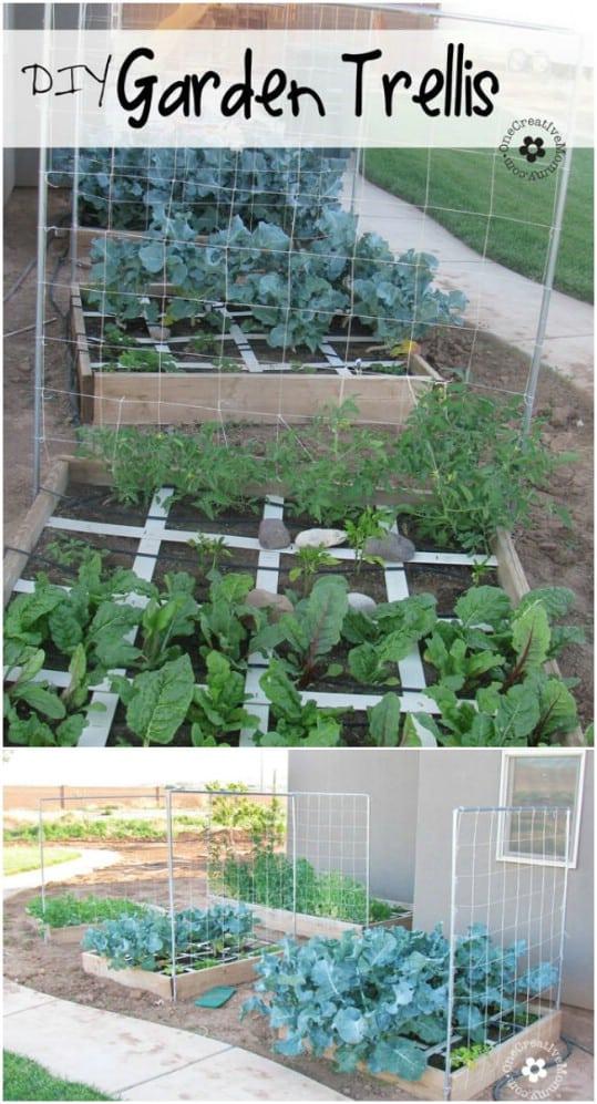 Beautiful Backyard Vegetable Garden