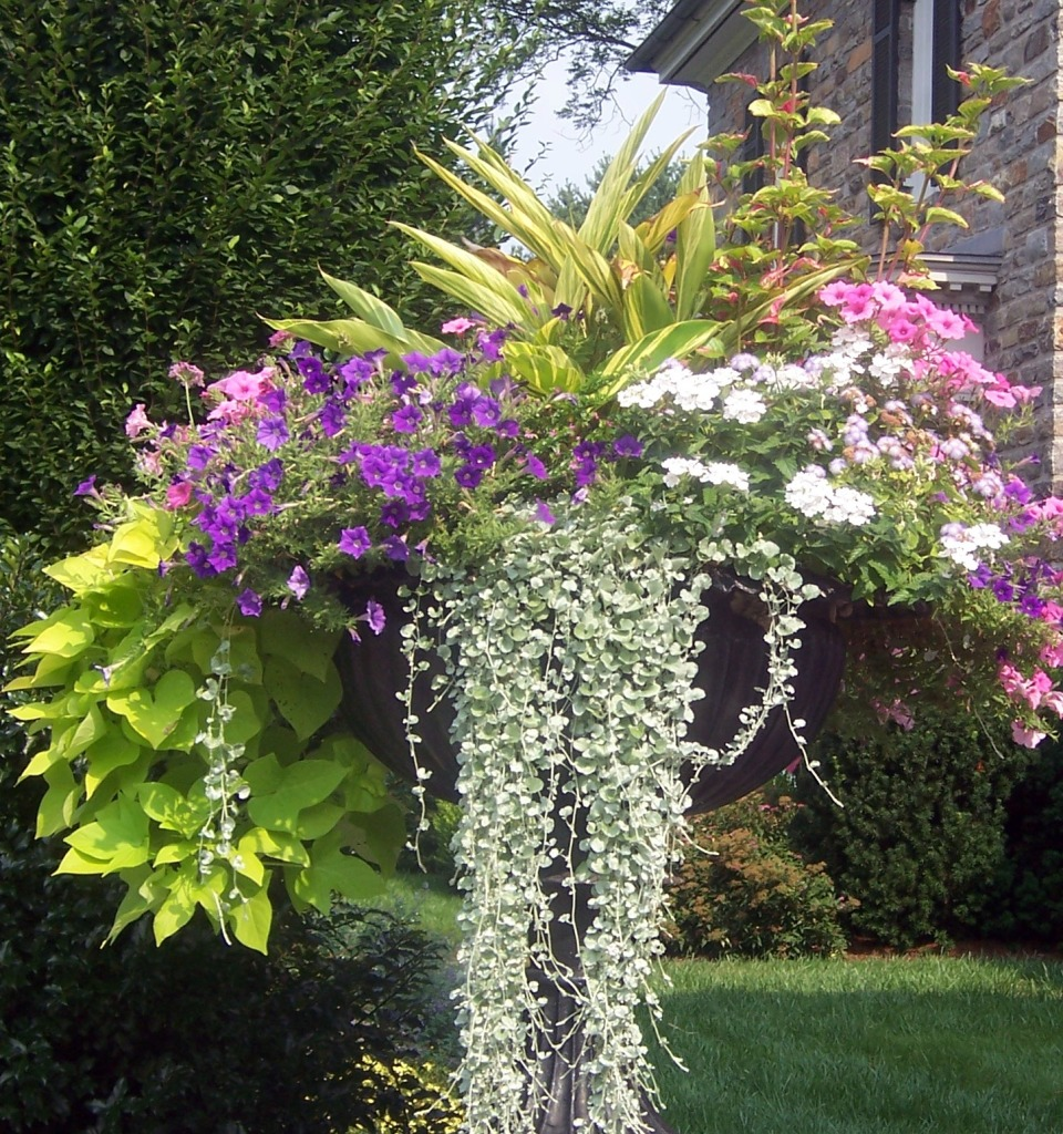 8 Stunning Container Gardening Ideas: 8 Fantastic Container Gardening Ideas For Limited Space