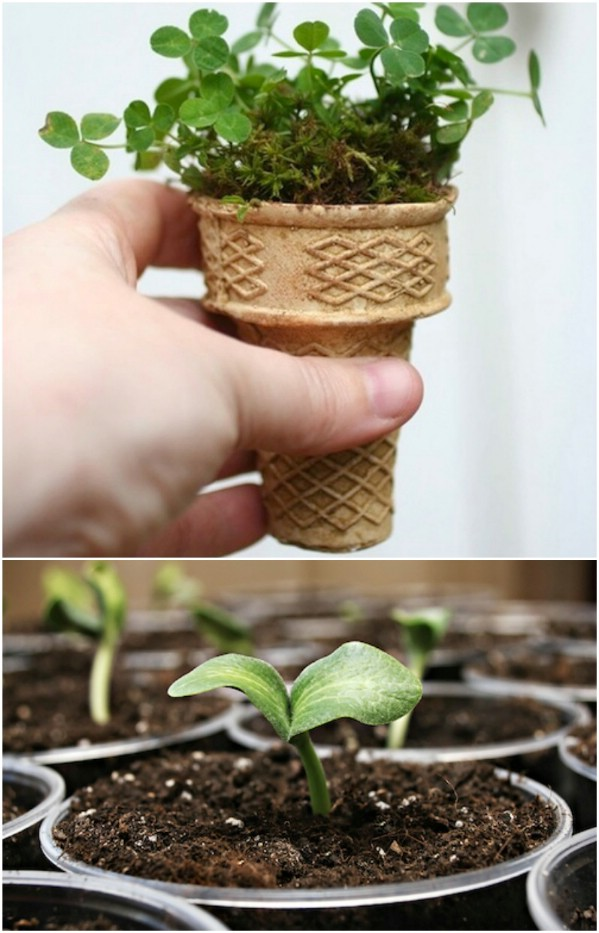 How To Make A Mini Vegetable Garden