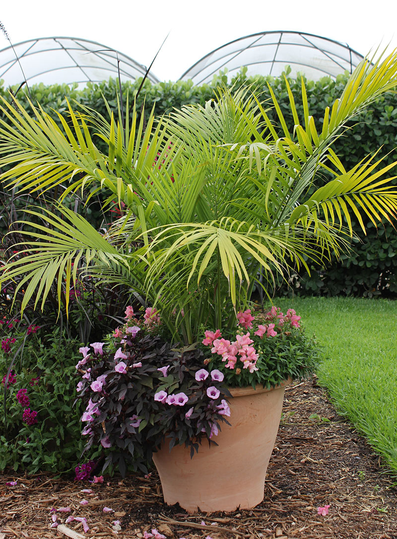 8 fantastic container gardening ideas for limited space - Tropical container garden ...