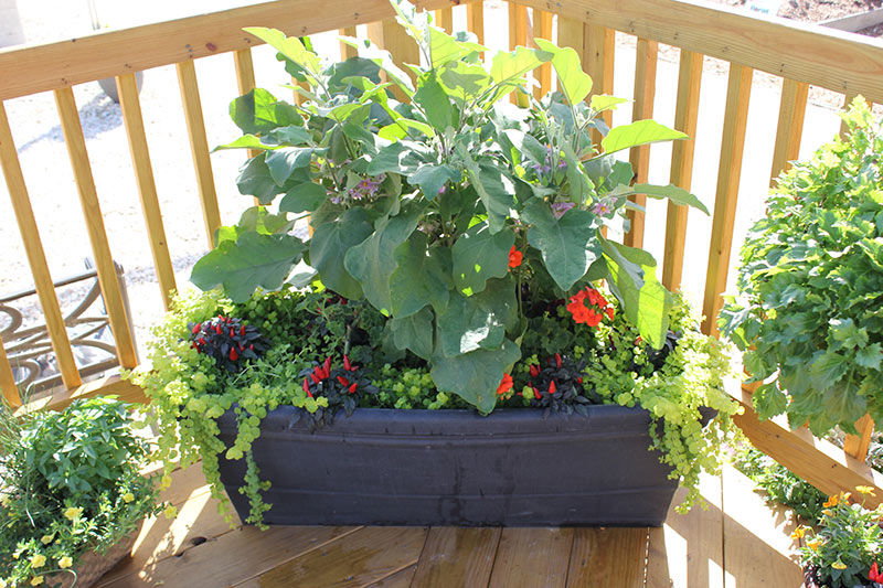 8 fantastic container gardening ideas for limited space for Limited space gardening ideas