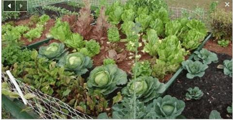 8-tips-vegetable-garden