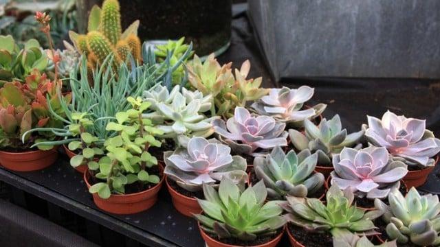 8 Types Succulents