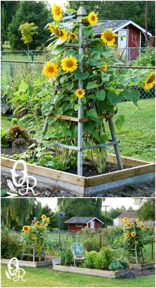 Delicieux DIY Obelisk Garden Trellis