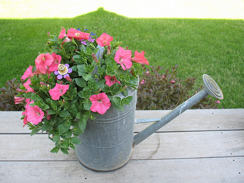 Brilliant Watering Can Planters You Must Have In Your Home And Garden