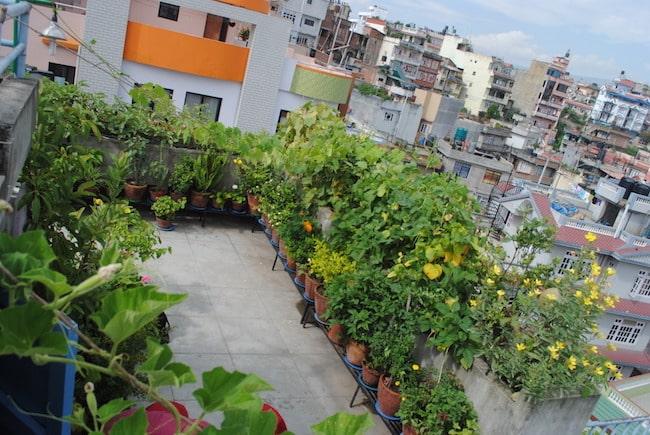 Rooftop Vegetable Garden. 31 Amazing and Inspiring Rooftop Garden Ideas