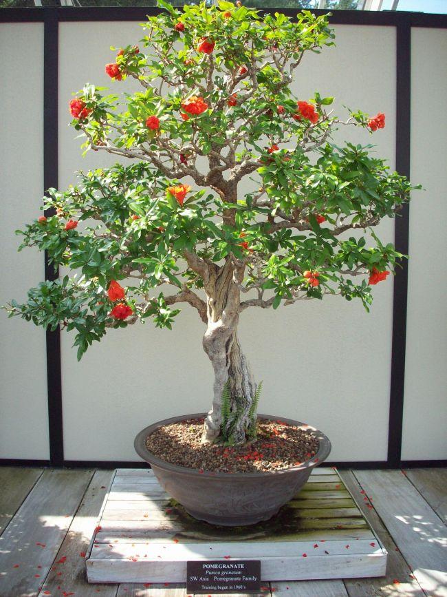 Small Diy Japanese Garden