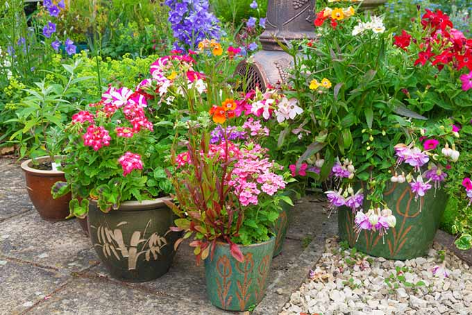 Keep your containers looking great with these 6 simple tricks for Easy to keep garden plants