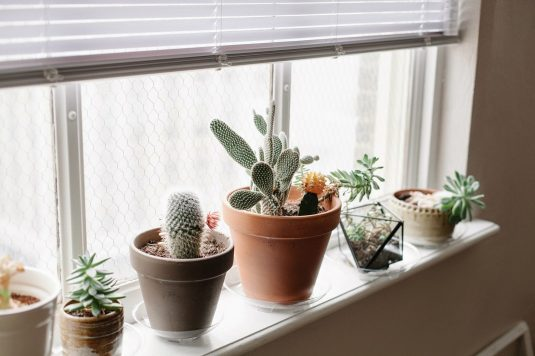 Elegant Windowsills Receive Full Light And Are Perfect Spot For Sun Loving Plants.  If You Want To Know Which Plants Will Thrive On Your Sunny Sills, ...