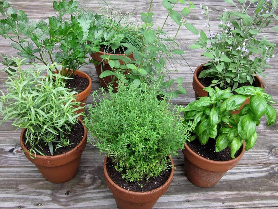7-clever-herb-gardening-tricks