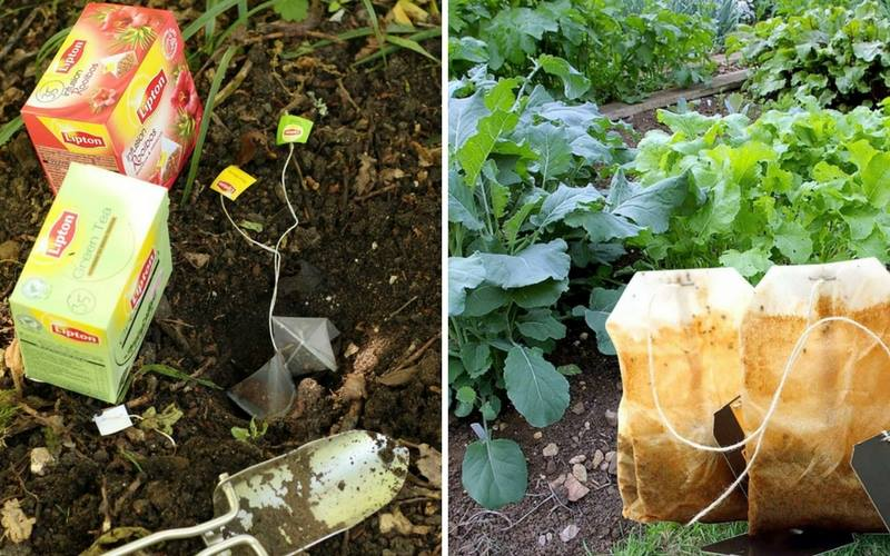 9 Ways To Use Tea Bags In Your Yard