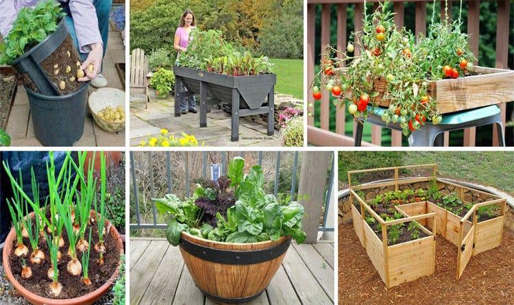 healthy-organic-veggie-garden