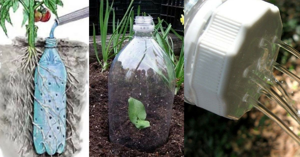 plastic-bottles-for-garden