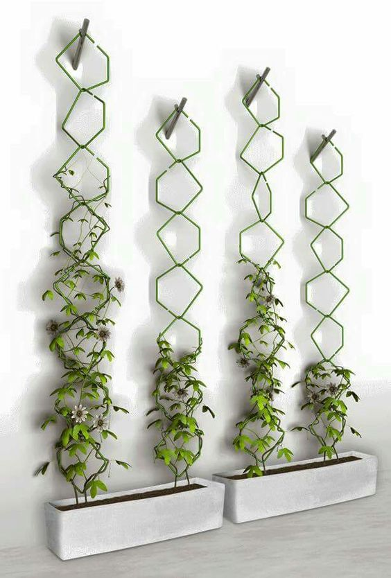15 Astonishing Climbing Plants Ideas For Fences And Walls