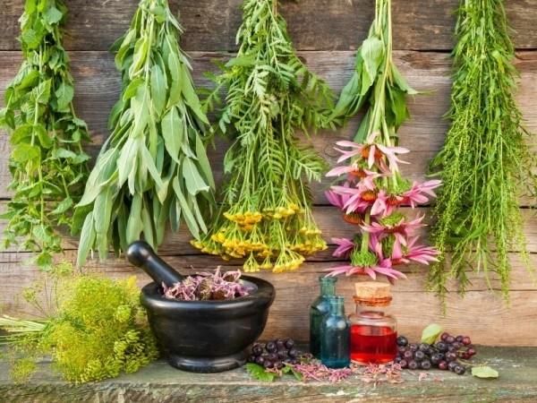 12-healing-herbs