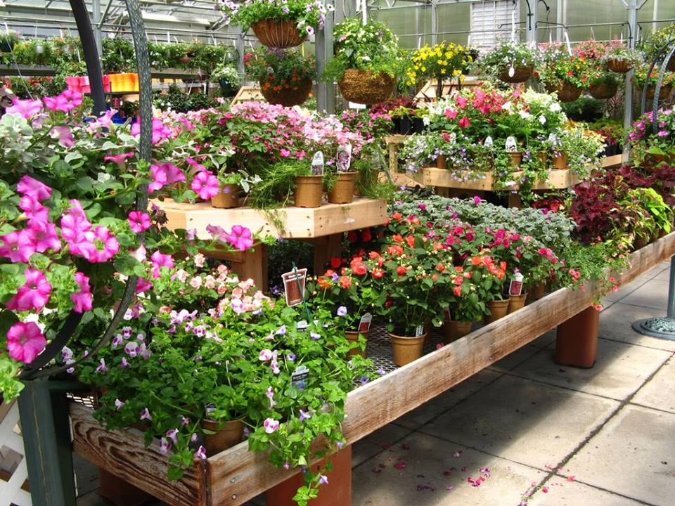 12-toxic-things-in-garden-centers